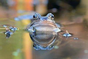 Agissons-nous, inconscients, comme la grenouille qui ne savait pas qu'elle était en train de cuire?